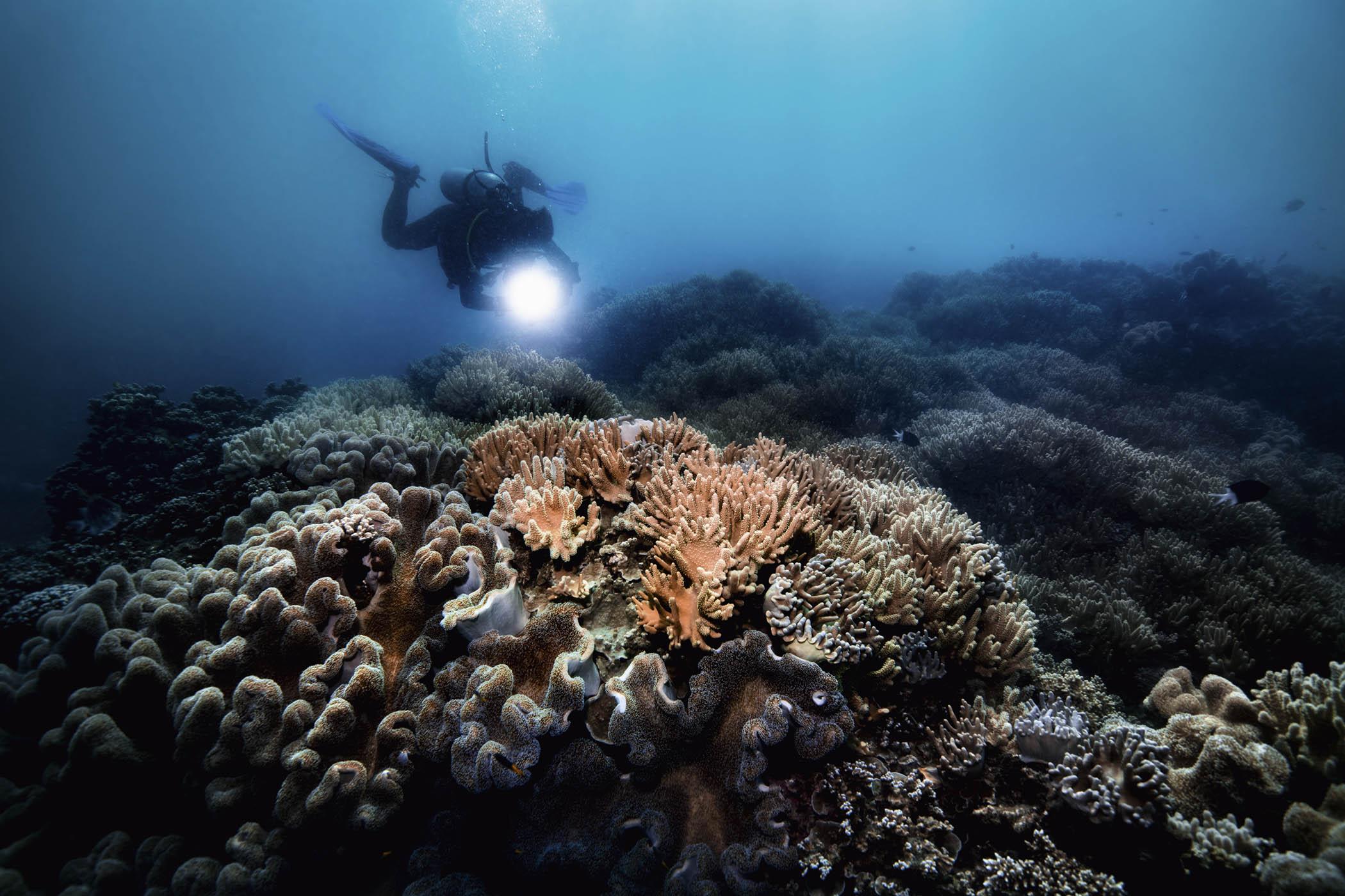 Oris Great Barrier Reef Limited Edition III